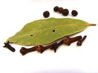 branch-plant-leaf-produce-spices-cloves-bay-leaf-laurels-1160181